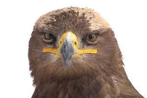 fotografia zwierzat, wildlife photography