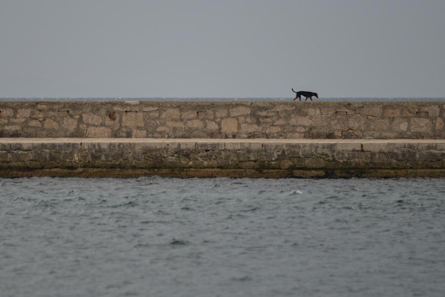 Croatia / Chorwacja, Krk, pies namolo / dog on the quay