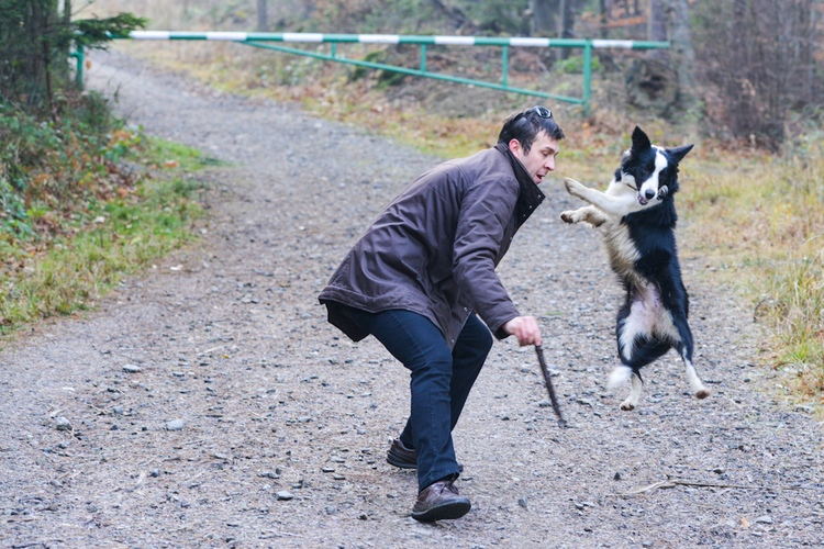 Pies i jego pan podczas zabawy
