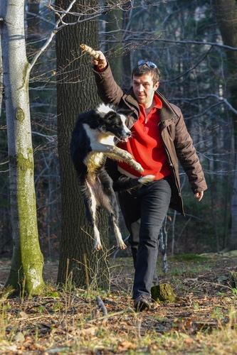 Skaczący szczeniak podczas zabawy, potret psa
