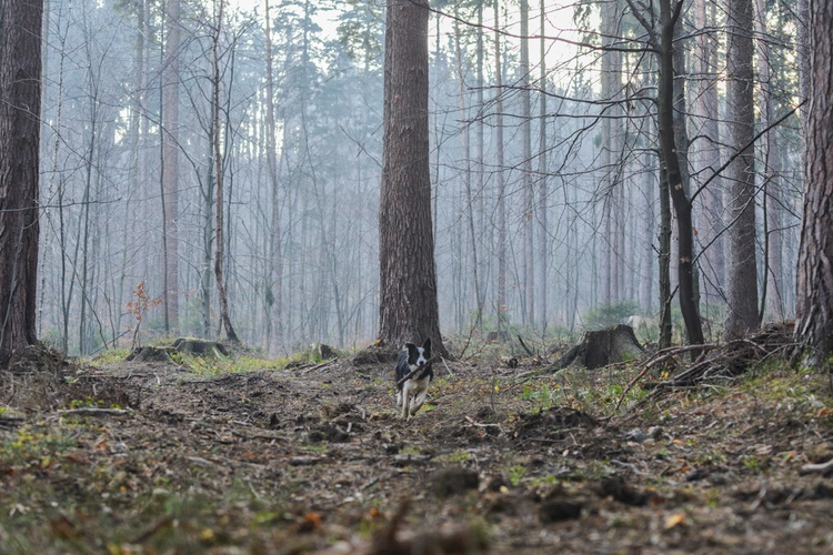 Biegnący pies w jesiennym lesie