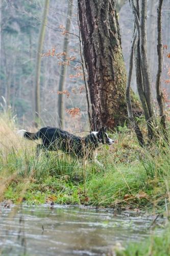 Fotografia psa biegnącego na spacerze