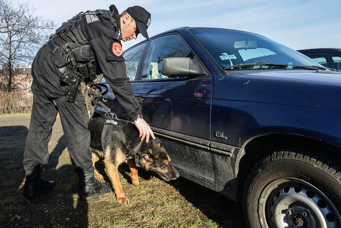 Pies policyjny szukający materiałów wybuchowych