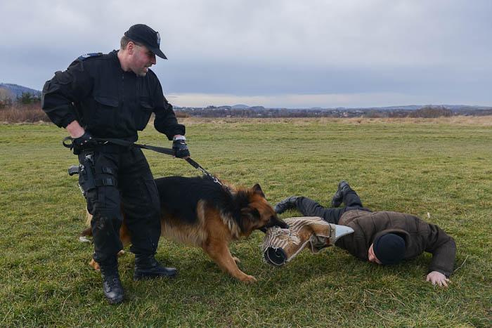 Fotografia zwierząt: trening psa policyjnego