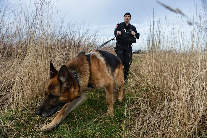 Pies tropiąco-obronny i policjant