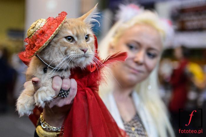 Fotografia zwierząt: koty